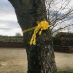 National day of reflection ribbon on tree